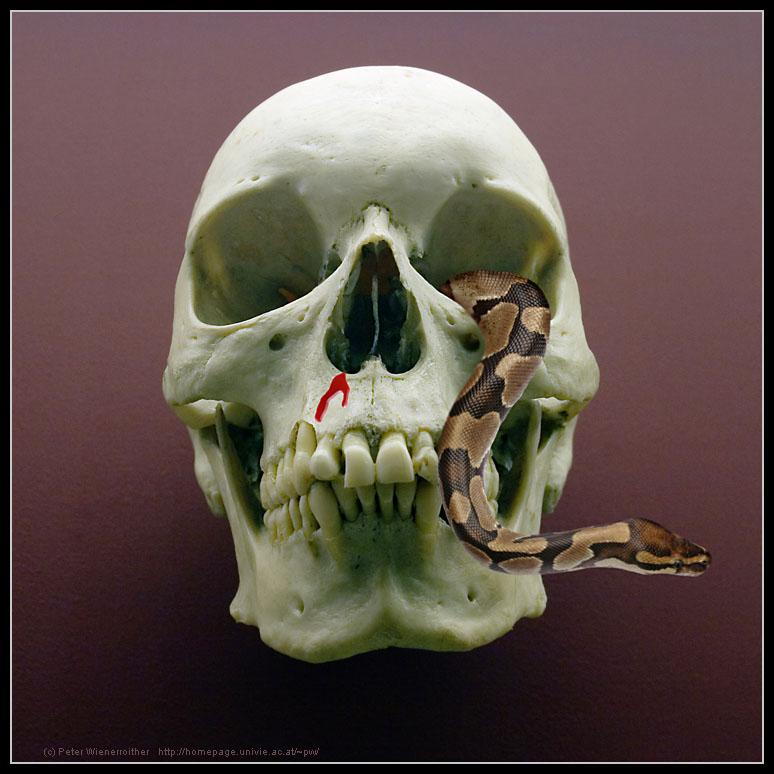 Tod und Schlange