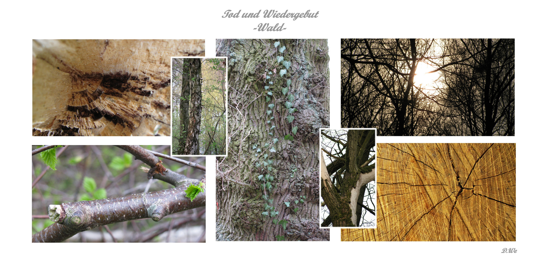 Tod und Wiedergeburt -Wald