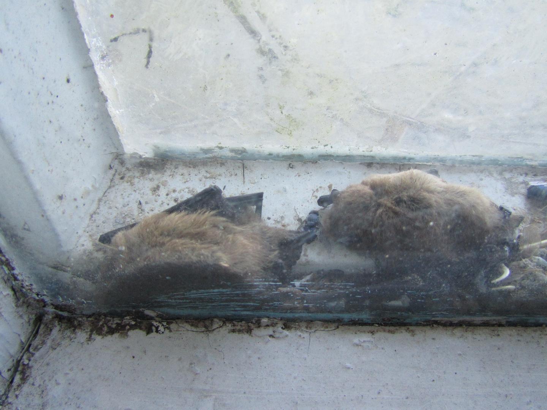 Todesfalle Doppelglasfenster
