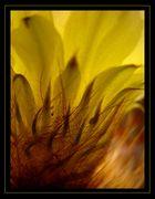Todos los Fuegos... La Flor de un Cactus