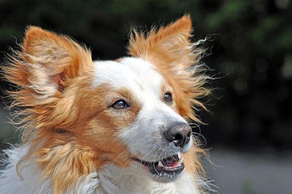 Toffee Smilla´s Freund ( Hund von Ragnar.F )