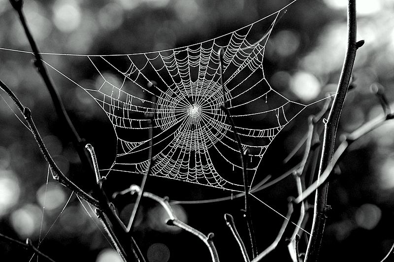 Toile d araignée !