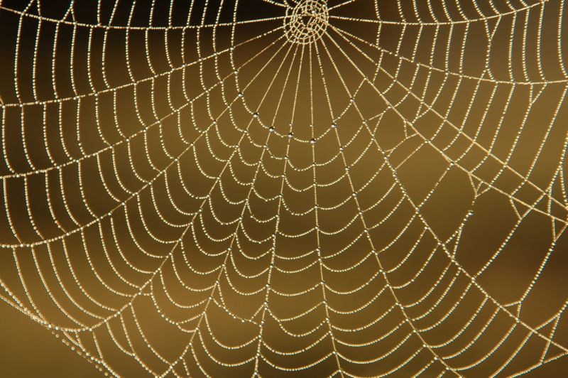 toile d araignée !!!
