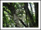 Toile d'araigne dans sous bois
