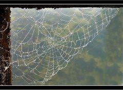 -Toile d'araignée-