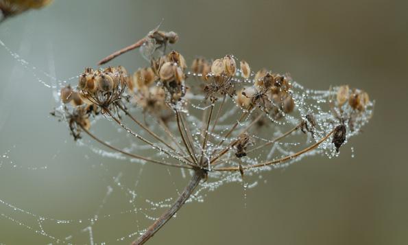 Toile d'Araignée au petit matin