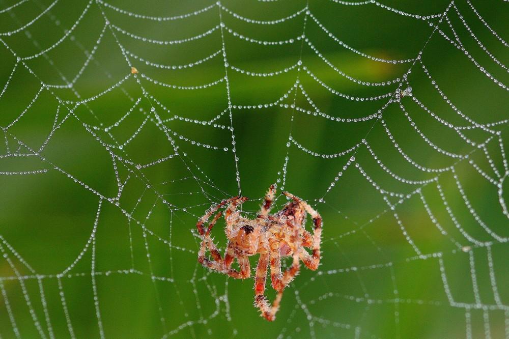 Toile d'araignée et son habitante