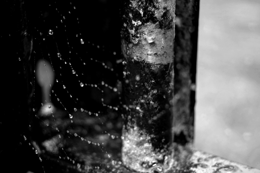 toile d'araignée sous la pluie