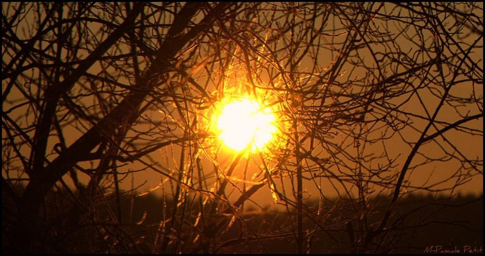 """""""Toile de soleil"""""""