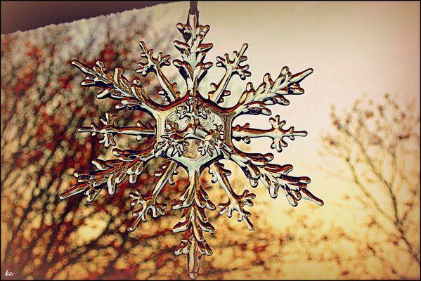 Étoile d'hiver......