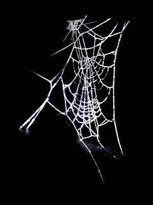 Toile givrée pour araignée pas nette.