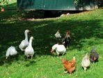 Toleranz auf dem Bauernhof