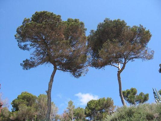 Tolle Bäume