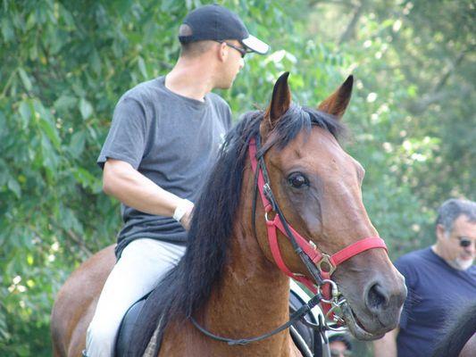 Tolles Pferd !!!!!!