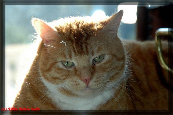 Tom beobachtet......