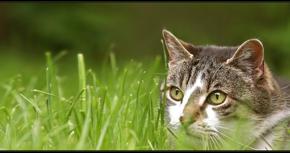 Tom im Gras