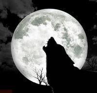 Tom. Wolf.