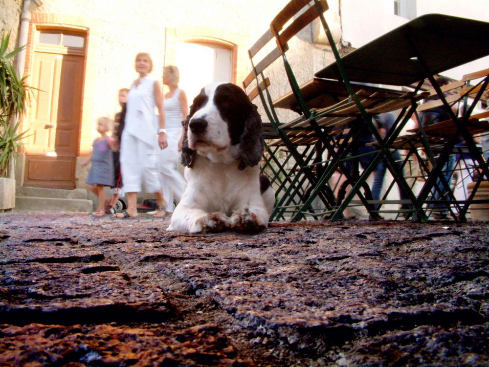 Tomando el fresco en una terraza de verano