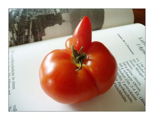 Tomate, Buch und Rezept