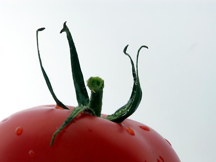Tomate II