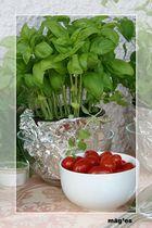 Tomate trifft Basilikum