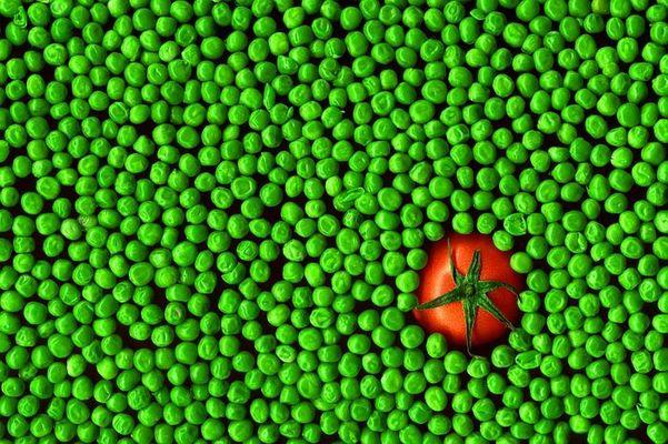 Tomate versus Erbsen