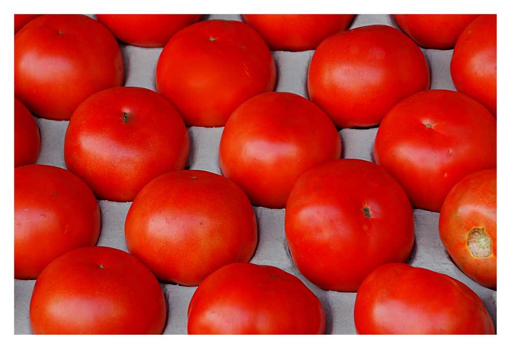 Tomaten aus Holland