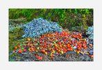 Tomaten-Lauchsalat an Unkraut