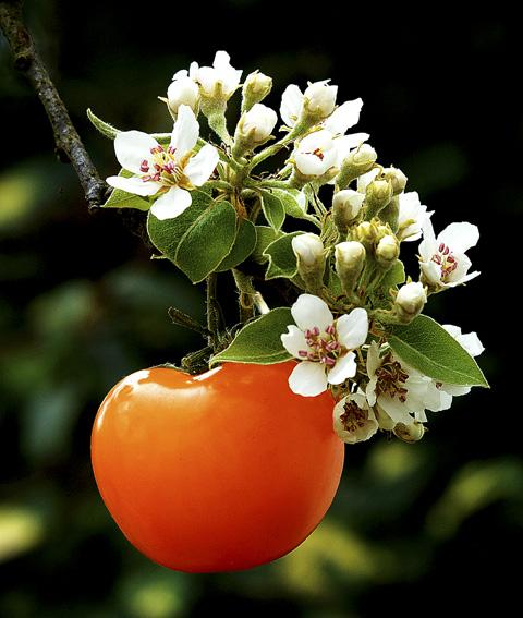 tomatenbaum ii foto bild sonstiges natur bilder auf. Black Bedroom Furniture Sets. Home Design Ideas