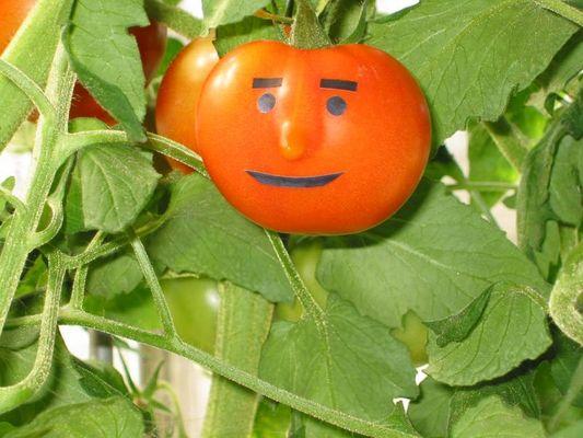 Tomatengeist