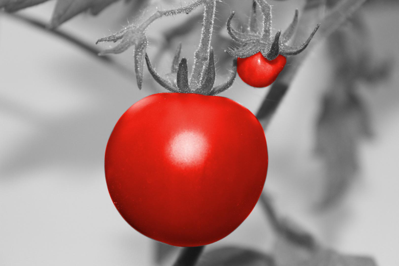 Tomatenretusche