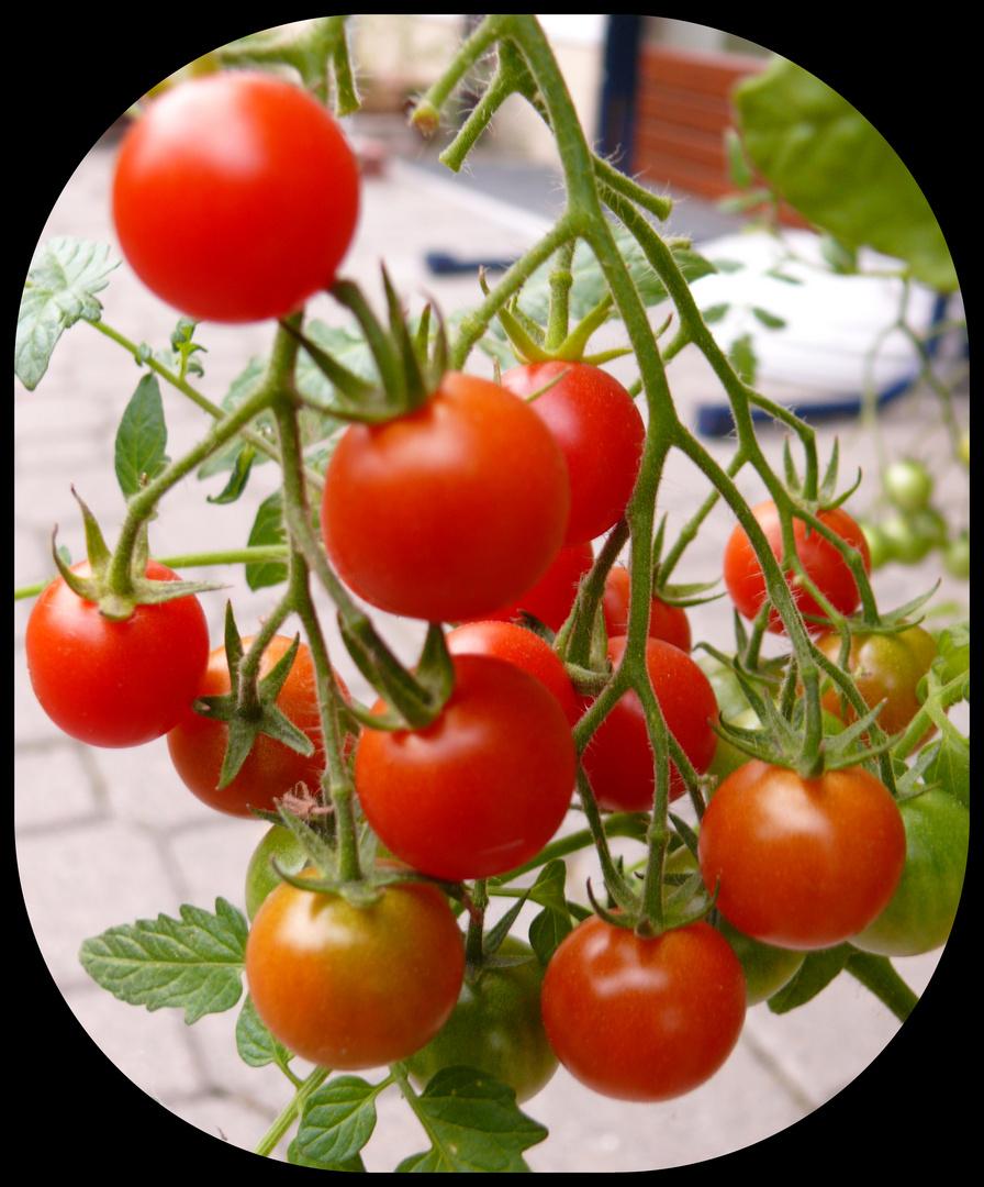 """""""Tomatenrot"""""""