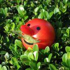 Tomato-Joe