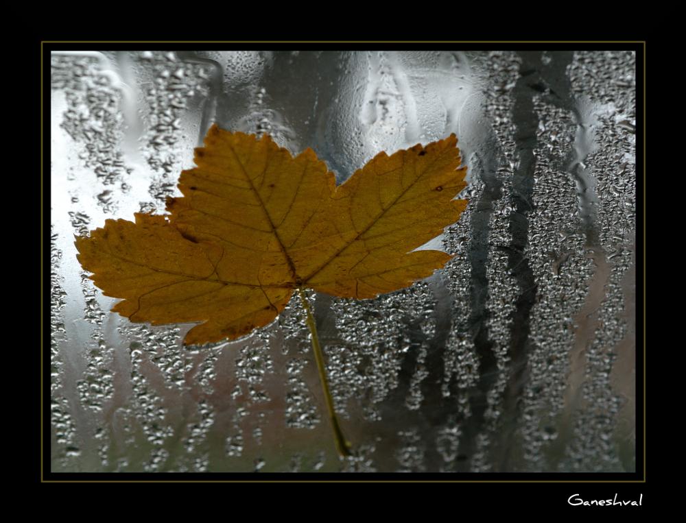 Tombent les feuilles...