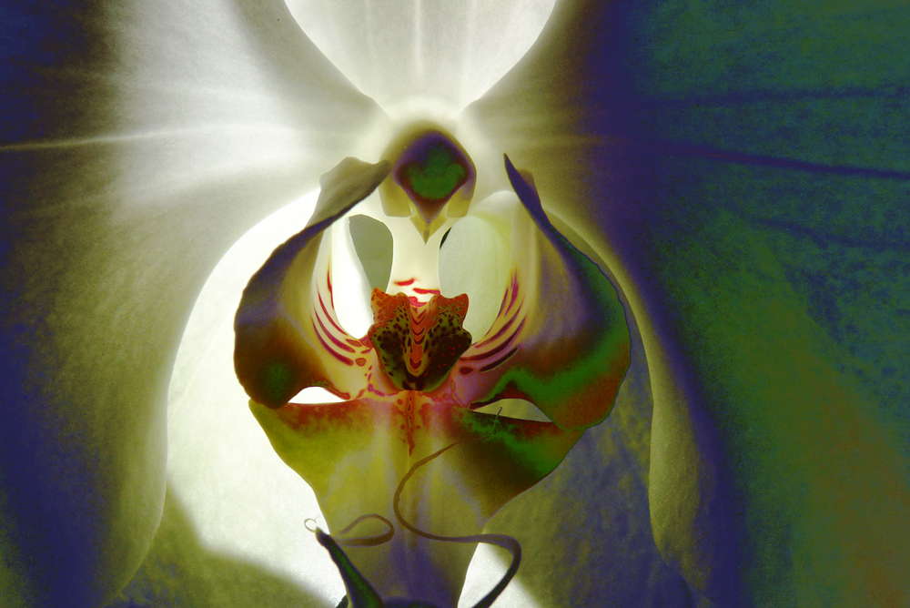 TONWERTSPIELE ODER ORCHIDEE ANDERS