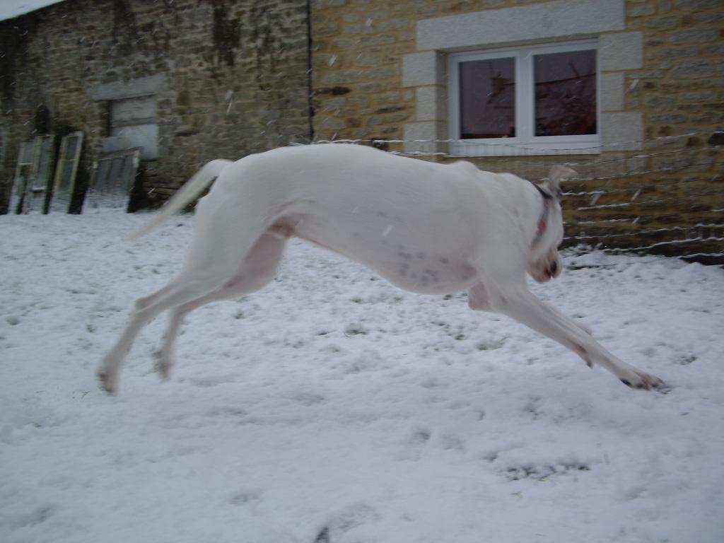 tony en plein imitation d'un saut de bambi le cerf