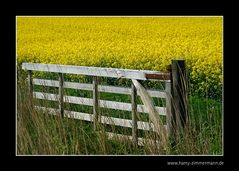 Tor zum Gelb