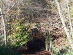 Tor zum Wald