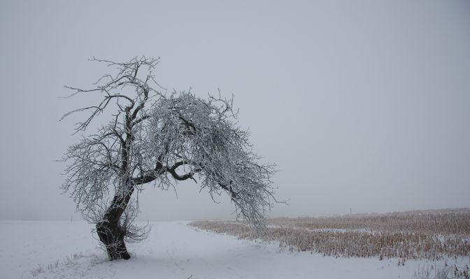 Torbogen für Dich, ein Apfelbaum im Winter