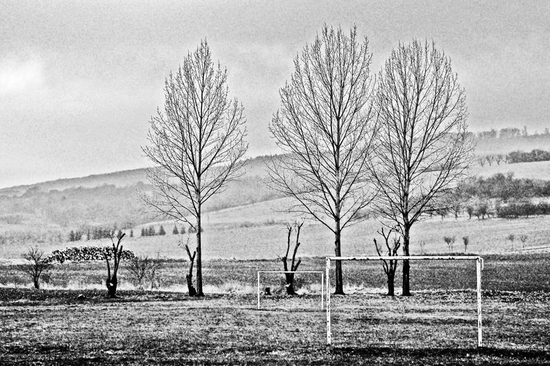 Tore vor Bäumen