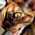 Tornado Kitty