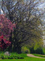 toronto spring (3)