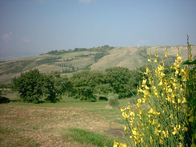 Toscana - Zypressen-Allee