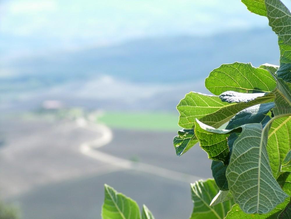 Toscana...che passione.