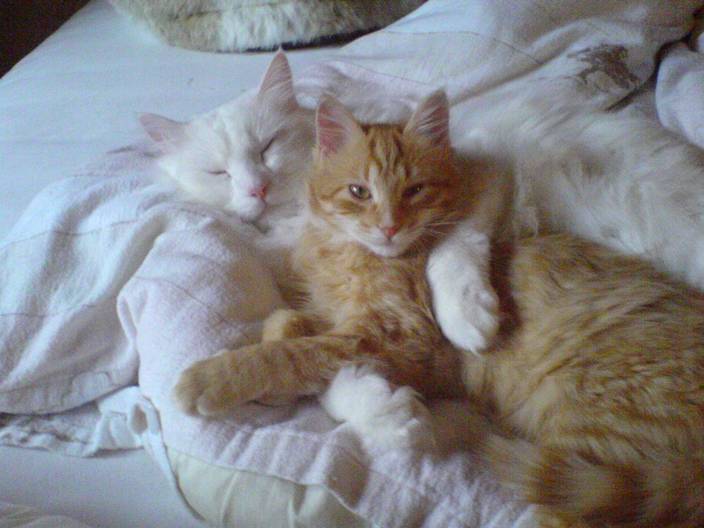 Toshy & Taleya