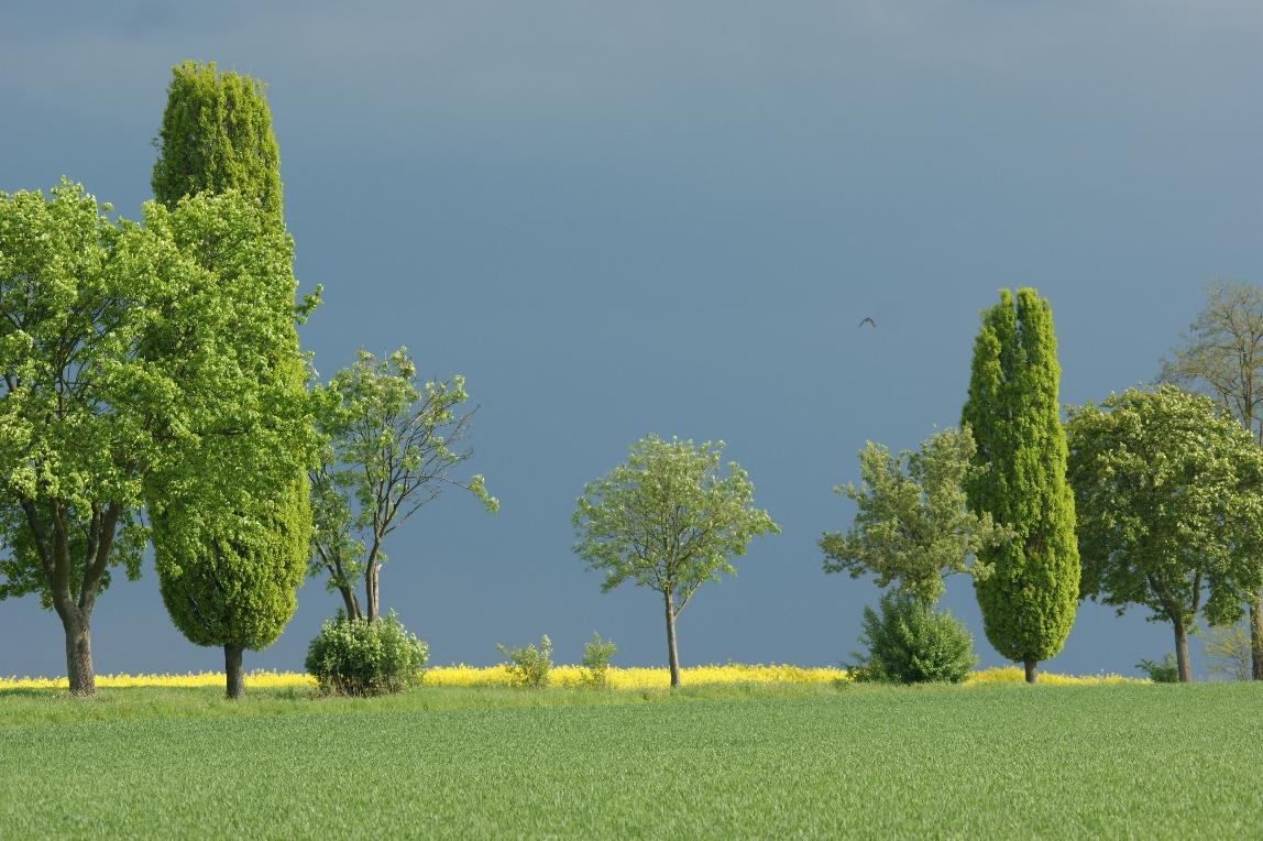 Toskana ähliche Landschaft in Mittelfranken-2