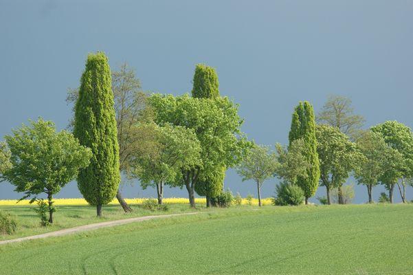 Toskana ähnliche Landschaft in Mittelfranken