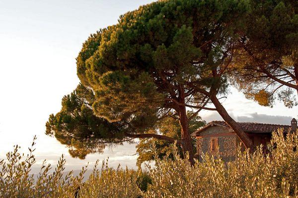 Toskana, etwas typischer :-)