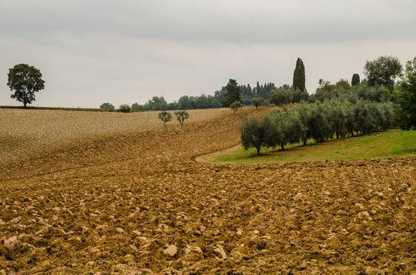 Toskanische Landschaft (fast) ohne Zypressen - 3