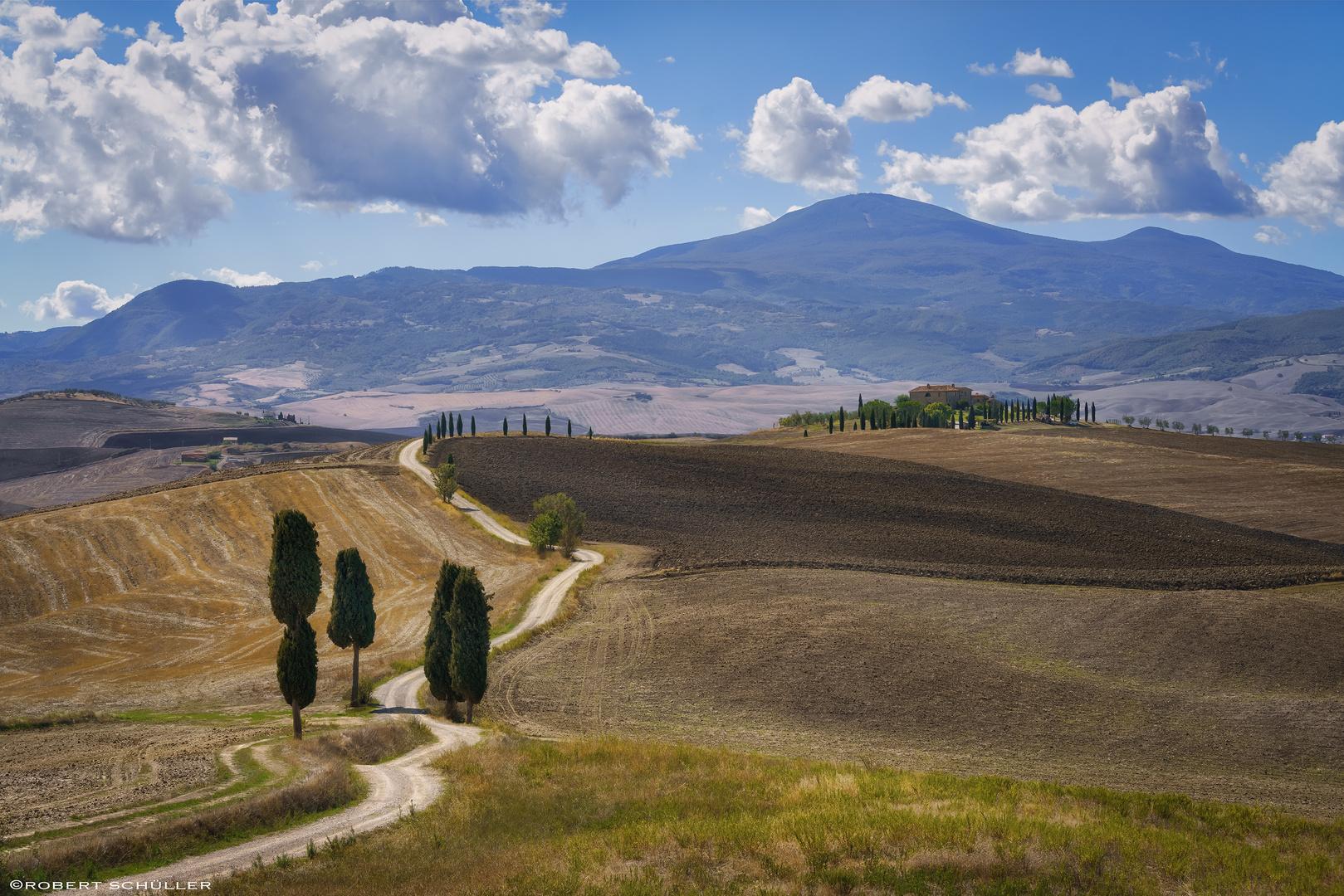 Toskanische Zypressen als Gladiatoren und Podere Terrapille